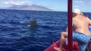 Humpbacks!