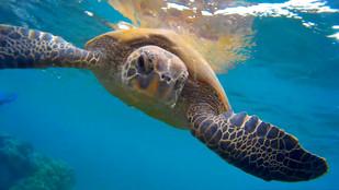 Fantastic Snorkeling in Maui!