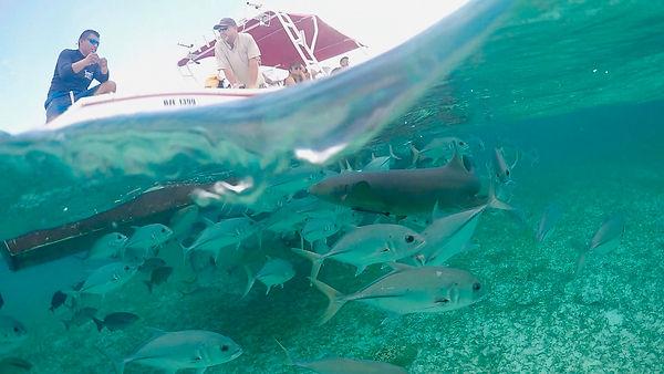 paul shark 2.jpeg
