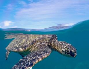 Maui 2021 Highlights