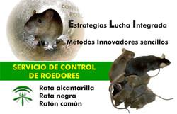 Rata 1