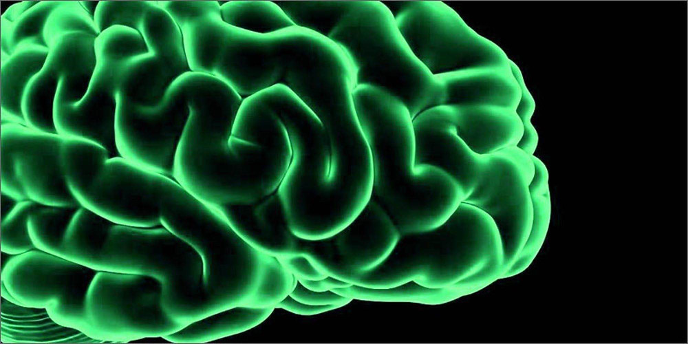 大麻_腦神經