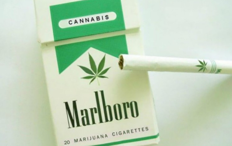 marlboro_cannabis_hemp_green swell