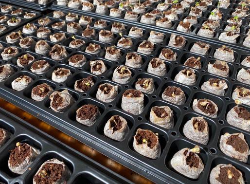 種植季開始!Green Swell旗下公司開始2020年度種植 | Green Swell's Company Start 2020 Growing Plan