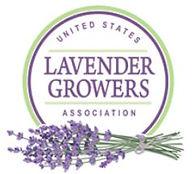 US Lavender.JPG