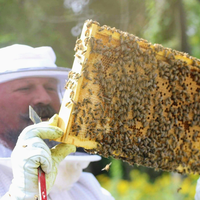 Beehive Inspection Class (2-4pm)