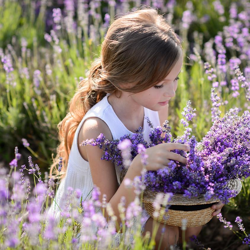 Lavender U-Pick Event on July 18th