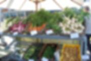Kingfisher_web.jpg