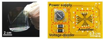 Sub-thermionic, ultra-high-gain organic transistors and circuits