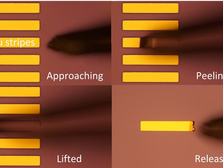 A breakthrough in developing staggered structure monolayer organic field effect transistors