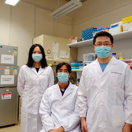 Breakthrough in cell mechanics discovers abnormal embryo elongation for early treatment