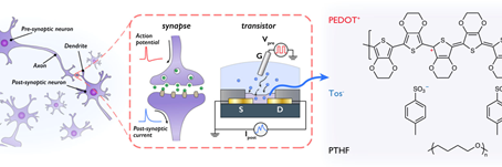 Organic electrochemical transistor for neuromorphic computing