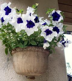 Pot de fleurs à suspendre