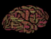 4. Neuroscience.png
