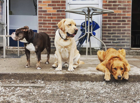 Trainer Perspective: Doggie Daycare
