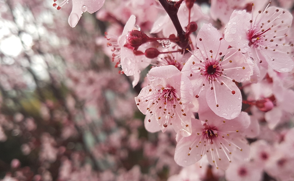A photo of soothing plum blossoms. Because no-one wants to see me in my underwear.