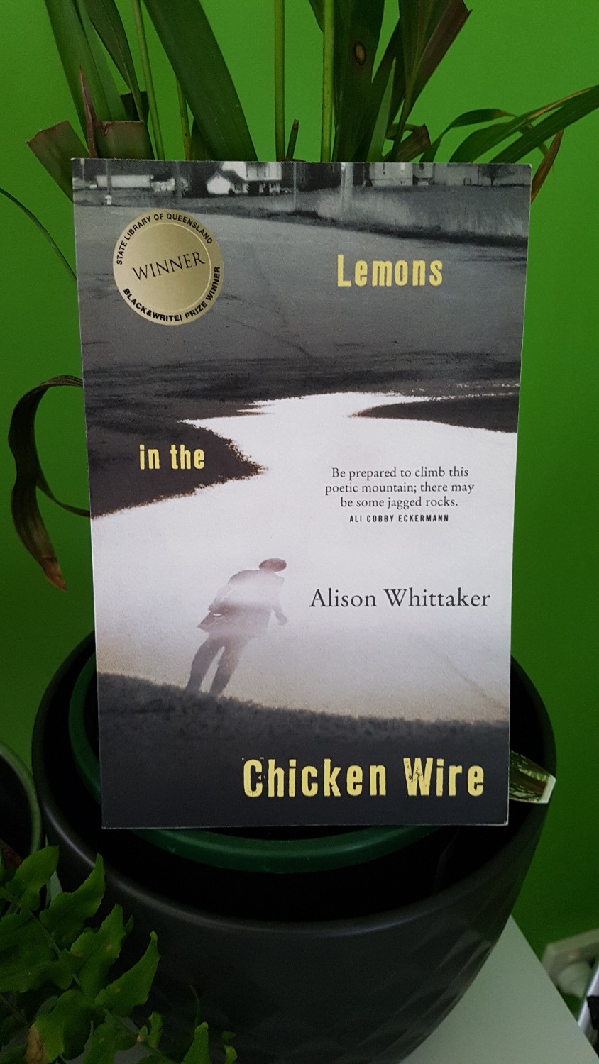 Photo of Lemons in the Chicken Wire, Alison Whittaker.