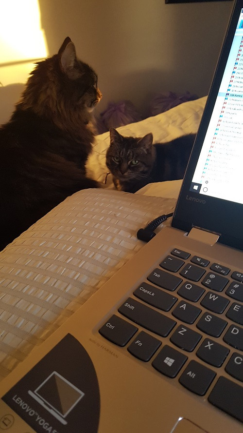 A photo of my bed desk with Heidi and Finn. They have learned to accept bed desk as one of their own.