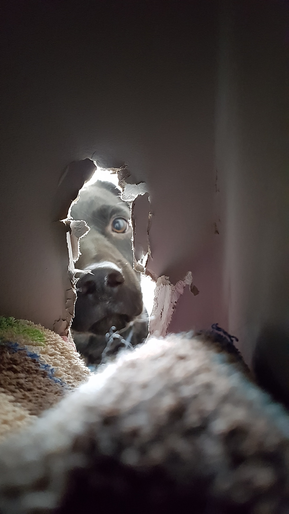 Nero in the laundry, seen through a hole in the linen cupboard wall