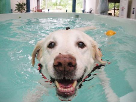 Hydrotherapy-Jacob.jpg