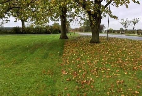 Leaf Clearance