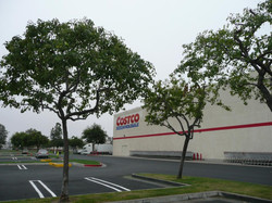 Costco Commercial Landscape