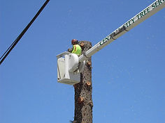 Large Tree Removal, Santa Maria