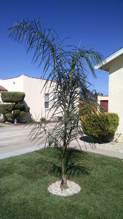 After: View of Palm Tree
