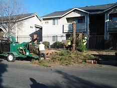 Tree Removal, Santa Maria