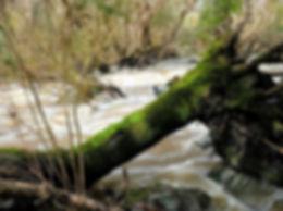 riverblurtree.JPG