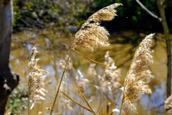 Growing Winchelsea