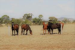 horses visit a fencing worksite
