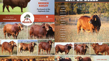Droughtmaster Bulls for Sale - 2017 Wajatryn Paddock and Auction Sale Bulls