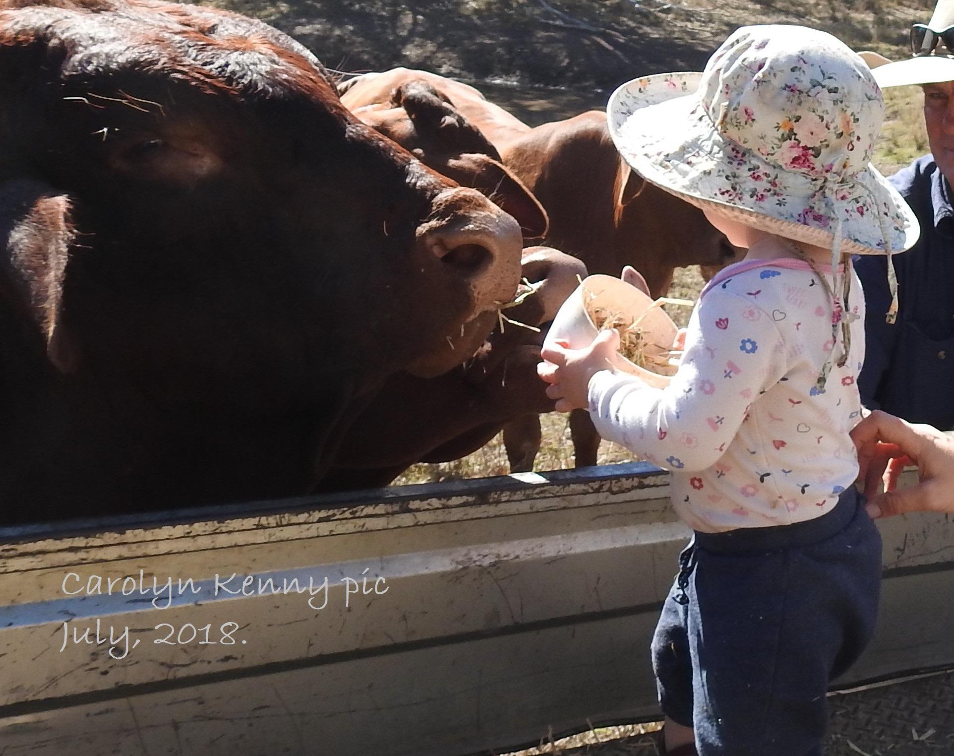 Granddaughter feeding Harley at Waja