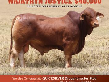 $40,000 Wajatryn Justice - Sold to Kimberley Bred WA