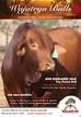 Wajatryn 2499 (P) $18,000 Top Priced Bull Highlands Sale