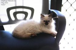 zeus office cat