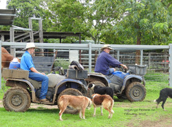 kensington lawson warren dogs