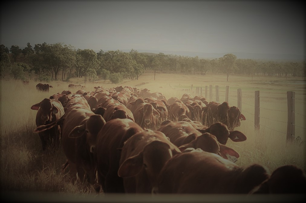 weaners in laneway