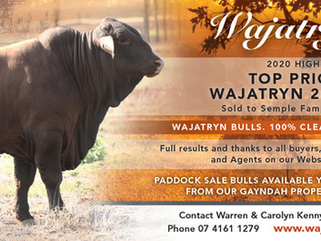 Wajatryn 2850 Top Priced Bull 2020 Highlands Sale