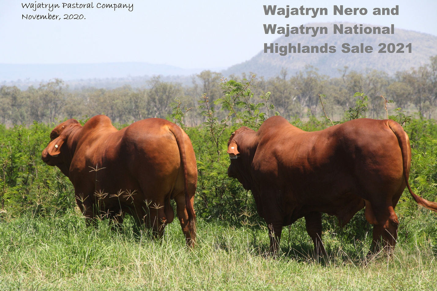 2021 bulls highlands leucaena website.jp