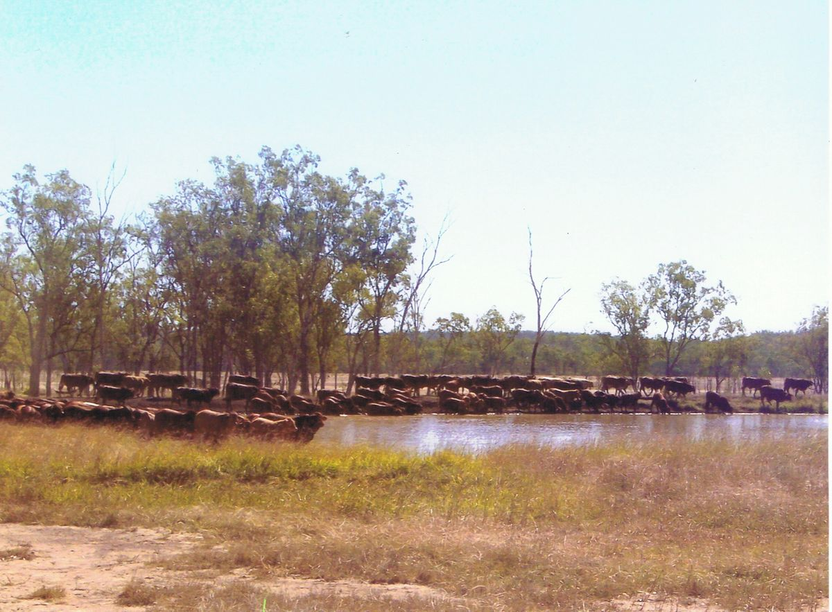 History weaners water