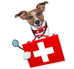 chien-urgence-veterinaire.jpg