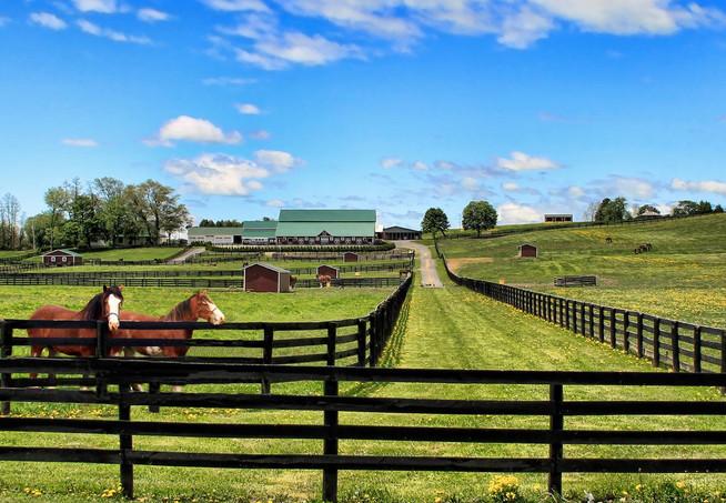 Galway rt 147 Horse Farm