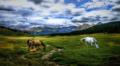 Colorado enhanced horses pic