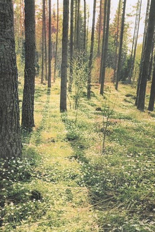 Forest Photo Print Backdrop