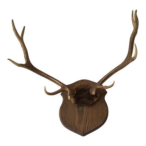 Large Elk Antlers