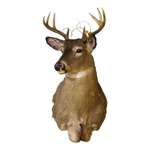 Mounted Buck