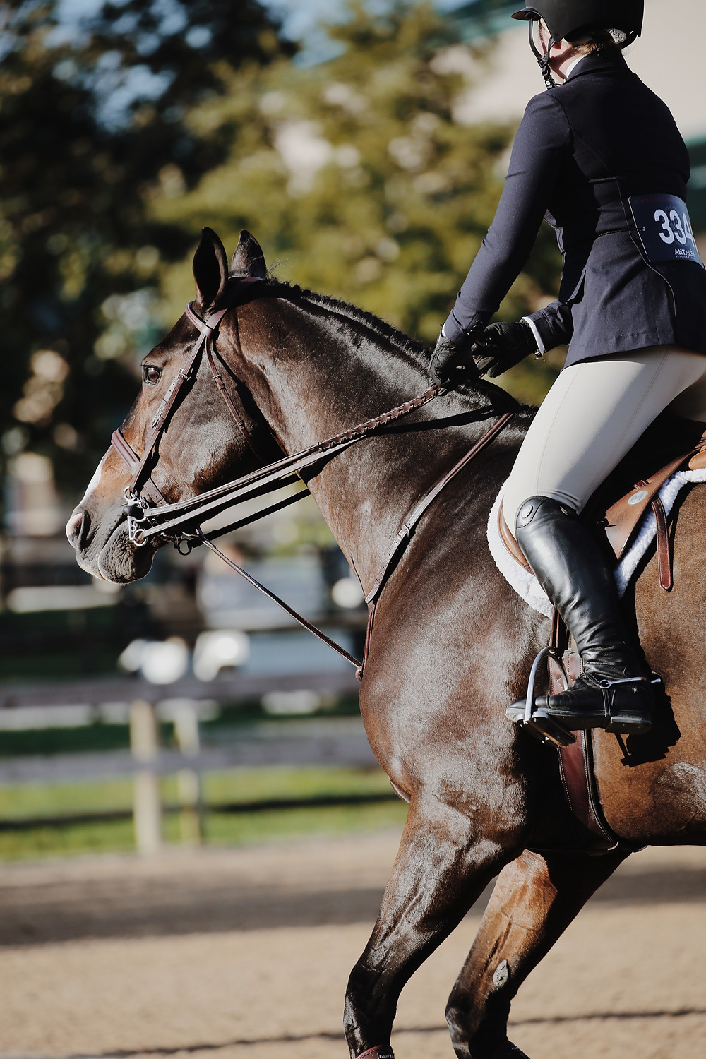 Horse at work in the hunter ring