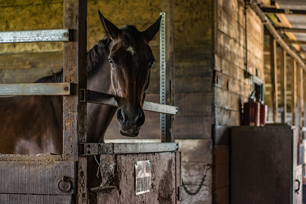 horse in stall waiting